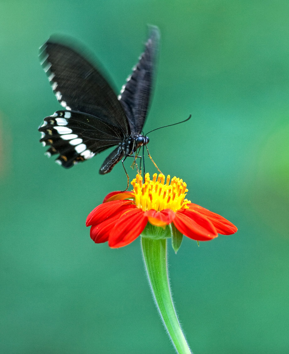 Beautiful Butterfly . . . .